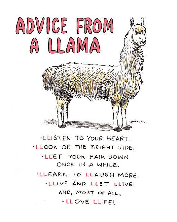3438fbde70720f7e021f56a367be3cfa--llamas-alpacas-cute-llamas